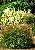 Various Oranmental Grasses