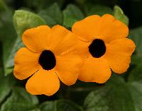 Unknown blossoms; vivid colors