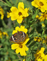 Butterfly/flower roadside