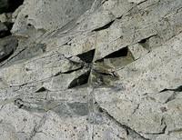 Coastal rock (limestone)