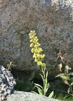 Flower amid rocks