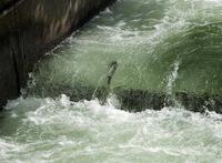 Fish Ladder, Bonneville Dam, Columbia River, OR