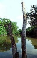 River and Tree Trunk
