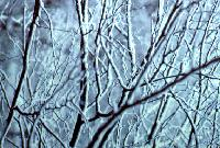 Snow/branches